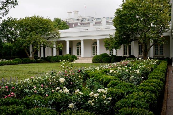 Melania Trump Renovates White House Rose Garden Ahead Of Rnc Speech