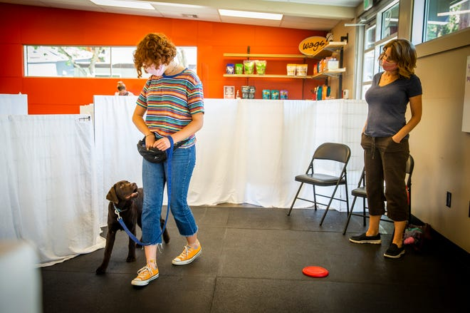 Cecilia Gonenne walks her dog, Louie, on Sunday, introducing him to the idea that commands may be paired with action at the Training Spot Pup2 class called Growing Pains, in Eugene.