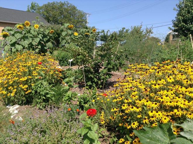 A garden at Minnetrista
