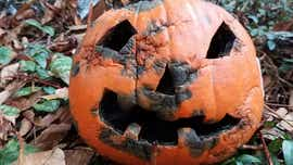 Oh, the horror and frustration of Halloween