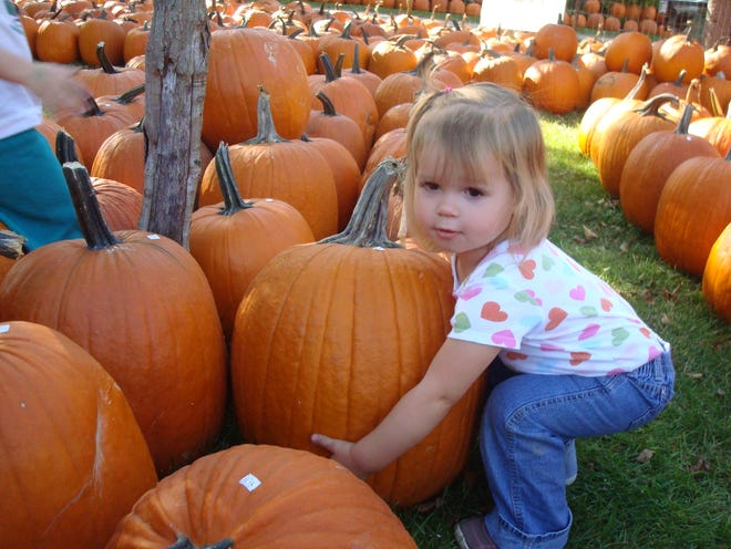 A child picks out a pumpkin from Meadowbrook Pumpkin Farm & Market in West Bend.