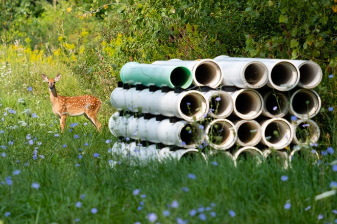 A deer stands in a field next to building materials to be used in a 26-unit condominium development Tuesday, Aug. 25, 2020, on Metropolis Street in Marine City. The site plan was approved by the city's planning commission in 2019, but the city commission still has to approve the documentation for the project, which will come at their Sept. 3 meeting.