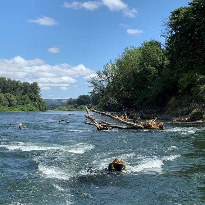 A log jam on the Willamette River, in the left channel of Wells Island, near Buena Vista Ferry south of Independence, has remained a very dangerous place for inner tubers and boaters this summer, becoming the cause of multiple rescues and one fatal accident last summer.