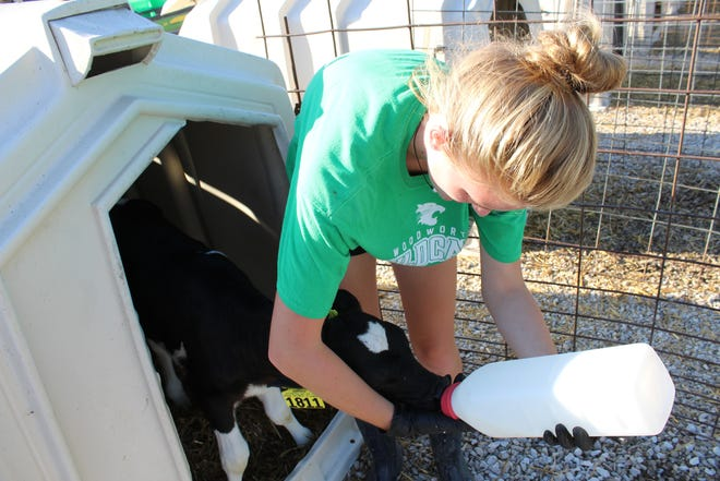 Normal gut health in calves is key to a strong, functioning immune system – which can have lifelong benefits.
