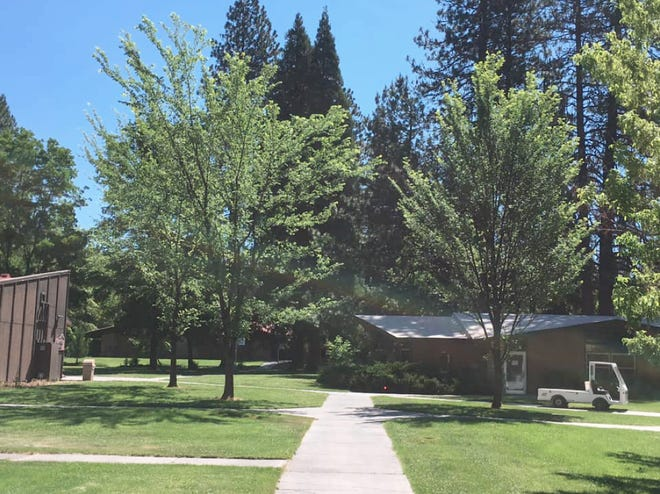 Memorial trees planted at College of the Siskiyous in Weed are from seeds that survived the Oklahoma City Bombing