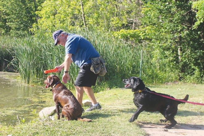 Joe Kramer trains his hunting partners, Norma and Ruby, to retrieve at Lemon Park Pond in Pratt as preparation for upcoming hunting seasons.