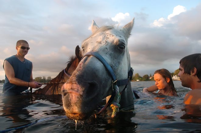 Port Charlotte resident Wayne Agnew, from left, and tour guides Tysa Alvis and Nate Gold, right, wade out into the waters of Palma Sola Bay during a Beach Horses tour in Bradenton in 2009.
