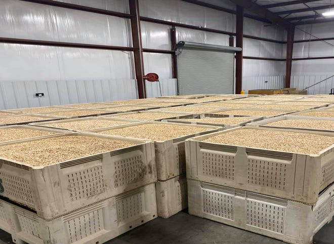 "Tulare County ag detectives recovered $350,000 in stolen pistachios and trailers after investigating what they called an ""elaborate scheme"" spanning three counties."