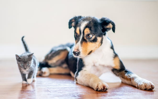 Contrary to what cartoons have taught many of us, dogs and cats are not natural enemies. They just need a little time to get to know each other.