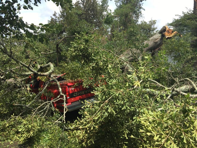 A tree snapped and crushed a red Chevrolet pickup truck on 19th Street in Alexandria as Hurricane Laura hit Rapides Parish early Thursday.