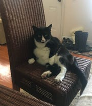 Larry, lounging like the king of the house he is.