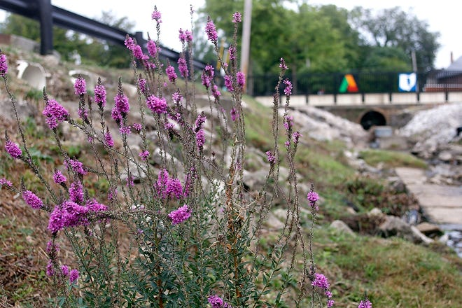 Wildflowers grow along the Town Creek near the Ashland Municipal Building are seen here Friday.