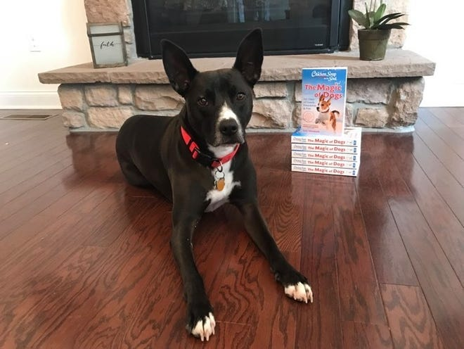 Barkley, a rescue dog who found his forever home in Horsham, was recently featured in Chicken Soup for the Soul: The Magic of Dogs.
