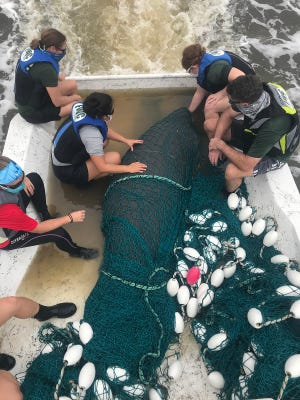 Florida Fish and Wildlife and Volusia County Marine Mammal staff rescue a manatee in Daytona Beach after being injured, likely by a boat strike. It is now recovering at the Jacksonville Zoo and Gardens' Manatee Critical Care Center.