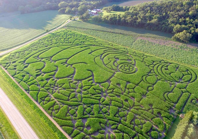 The 2020 corn maze at the Treinen Farm in Lodi features a tardigarde, a microscopic animal that is considered one of the world's most resilient creatures.