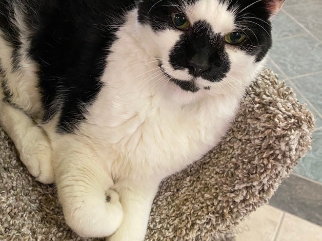 Marley will greet you at the door when you visit the Oshkosh Area Humane Society.