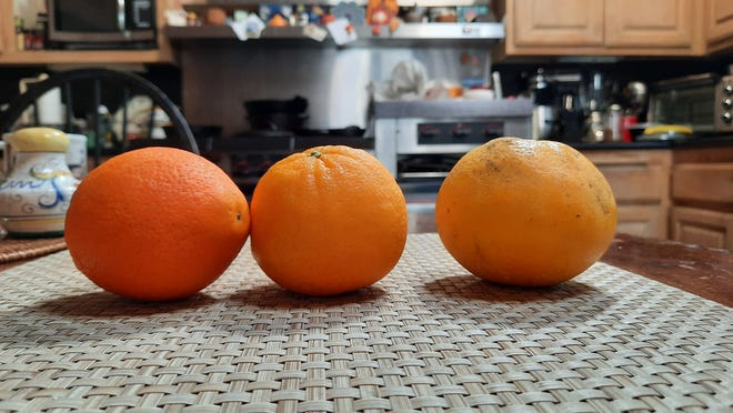 Oranges photographed on Samsung A51 phone