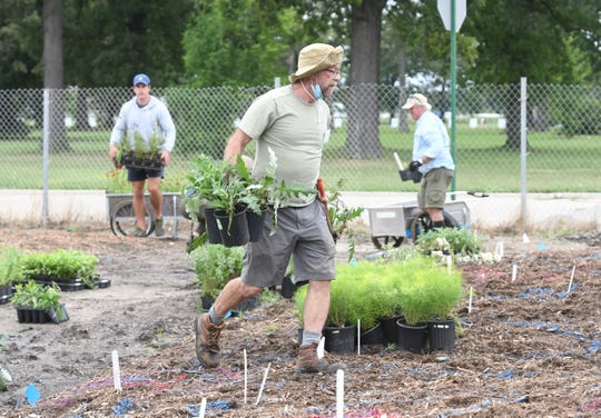 Volunteer Richard Thomas carries various plants to bed 5 as part of the landscape and design for the Oudolf Garden Detroit project on Belle Isle on Saturday, August 29, 2020.