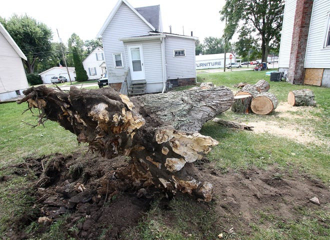 Storms Friday night in Minerva felled a 40-foot tree near the center of town. The owner of this rental property at 300 Vine St. said  the tree fell and damaged a portion of the roof and also broke a window on the neighboring home. No one was hurt.