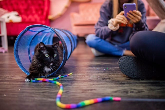 Customers interact with cats inside the Tally Cat Café's lounge.