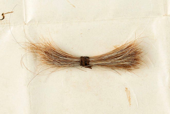 This July 2020 photo released by RR Auction shows a lock of hair from former President Abraham Lincoln, to be auctioned Sept. 12, 2020, by the Boston-based auction firm. The lock of hair was removed during Lincoln's postmortem examination in April 1865 after he was fatally shot by John Wilkes Booth at Ford's Theatre in Washington. (Nikki Brickett/RR Auction via AP)