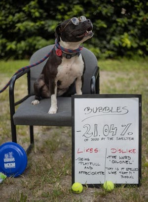 Bubbles- is a 6-year-old spayed female terrier mix.