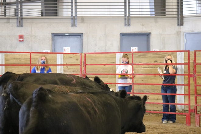 Nevada FFA member Ellie Moser, far right, evaluates breeding heifers at the Iowa FFA Livestock evaluation career development event held Saturday, August 29th at the ISU Hanson Center