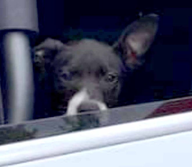 The Okaloosa County Sheriff's Office said a woman tossed out this dog from her car while stopped on the U.S. Highway 90 bridge in Milligan.
