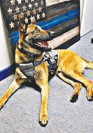 St. John K-9 Officer Glenn has made a notable difference in stopping and detering rural crime in Stafford County, in just 7 months on the job.
