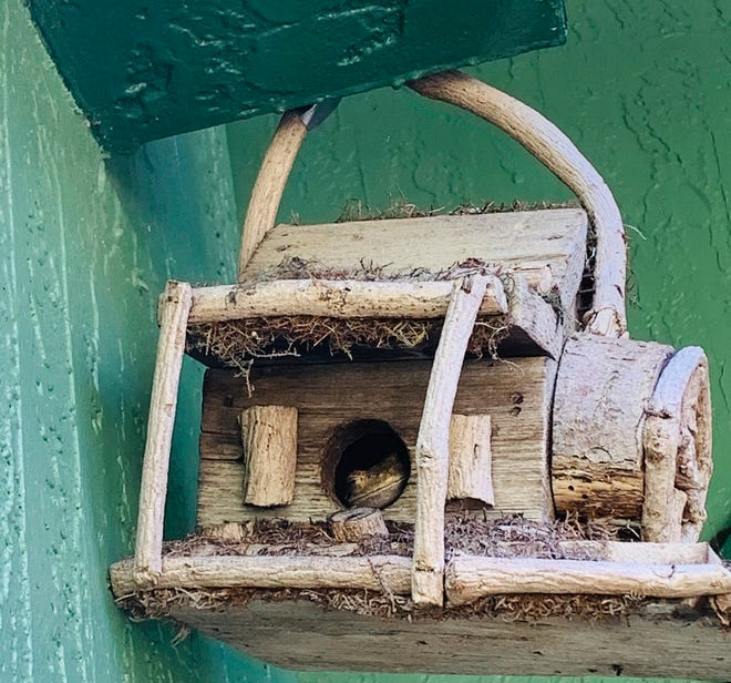 Frog in birdhouse.