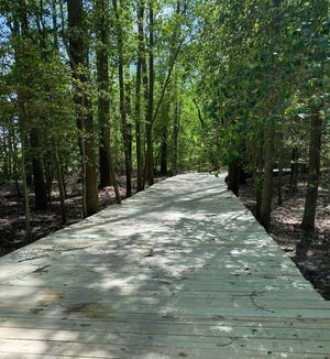 About half of the walking trail at Sandhill Fields consists of a raised boardwalk.