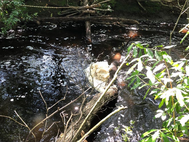 Foam floats in a creek three and a half miles from the Chemours plant south of Fayetteville. State officials are investigating water quality to find out what caused it and whether it might pose a threat to drinking water.