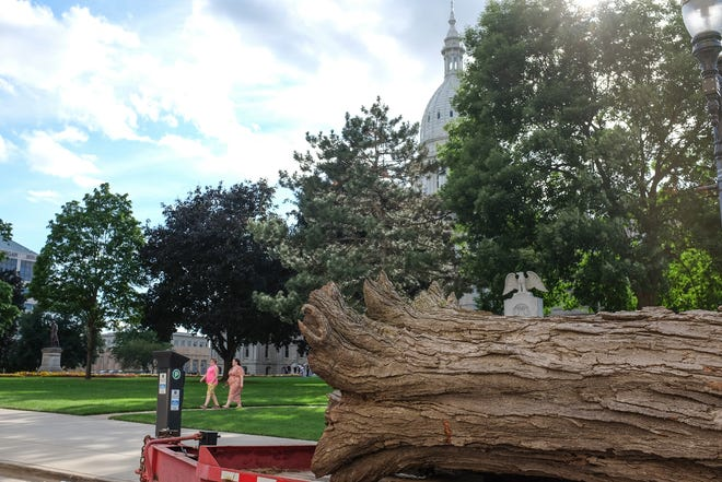Remnants of one of the three maple trees cut down from the Capitol grounds is ready to be hauled away Saturday, Aug. 29, 2020.