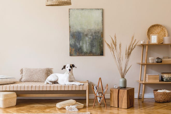 Your pup might love the trendy decor of 2020 — eco-friendly and sustainable goods.