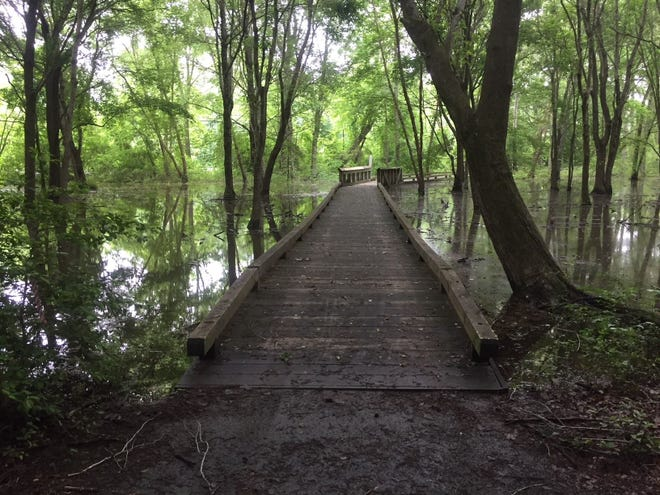 A raised walkway in the swampy woodlands of John J. Radcliffe Conservation Area in Chesterfield. The park received money from a national fund to up its acreage.