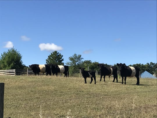 Culling decisions are a routine part of beef cow-calf herd management.