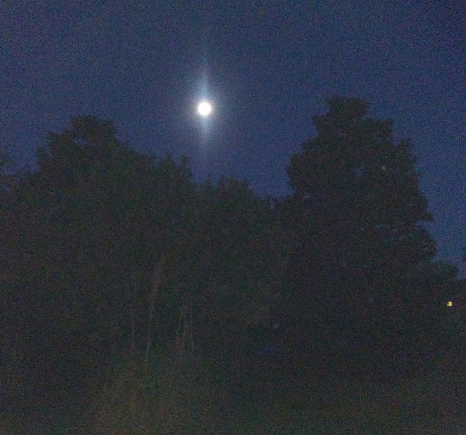 The full moon shines over the magnolias in Heritage Park.