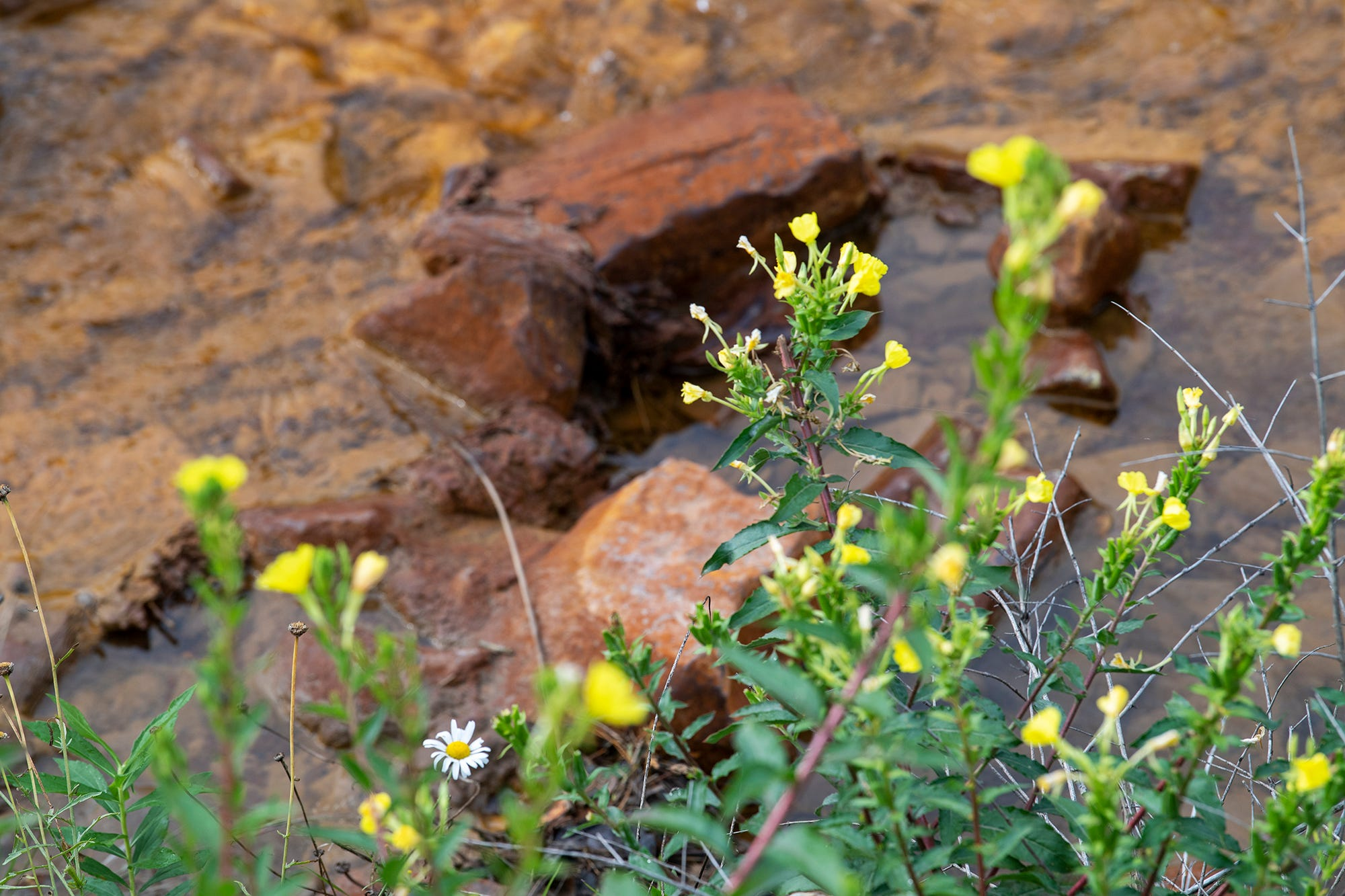 Wild flowers bloom above a mine discharge diversion trench with its reddish water.