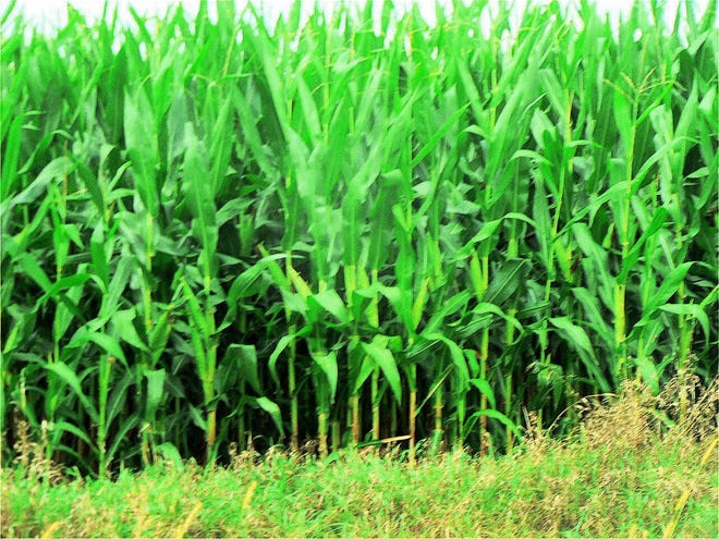 Selecting the correct hybrid/variety can often mean the difference between profit and loss.