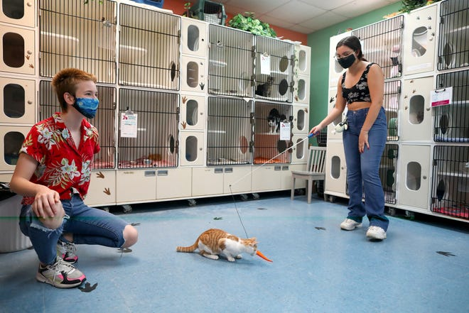 Megan Tached, right, uses a toy to play with a kitten named Naruto while her friend Ahnika Gee, left, watches in a private adoption room at the Alachua County Humane Society in Gainesville on Thursday. The Humane Society has been adopting lots of pets during the COVID-19 pandemic. And with private scheduled visits and safety protocols, people can safely visit and meet the animals up for adoption.