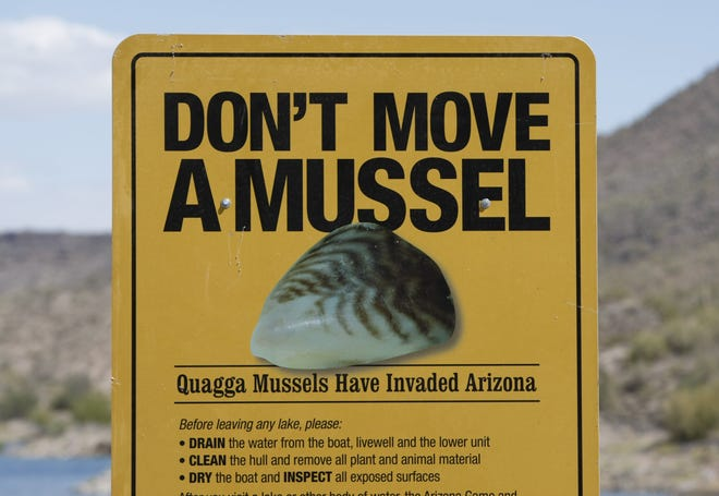 Signs like this have been at reservoir around Arizona as part of a campaign urging boat owners to slow the spread of quagga mussels.