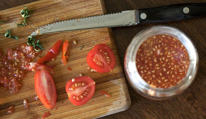Tomato seeds can be saved to plant the following year.
