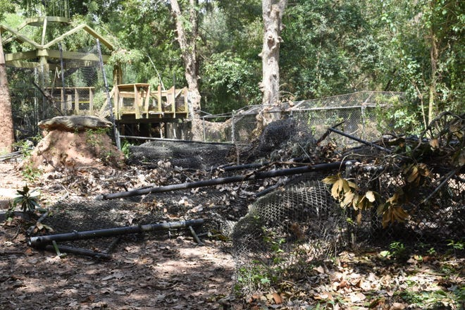 The enclosure that housed the cougar at the Alexandria Zoo was destroyed when Hurricane Laura swept through the area last Thursday. The cougars are temporarily relocated to the Baton Rouge Zoo.