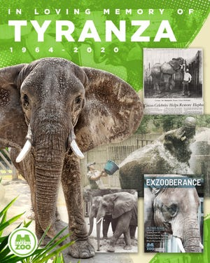 Tyranza, one of the Memphis Zoo's African elephants, died Friday.