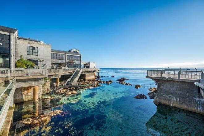 The Monterey Bay Aquarium has seen a huge loss in revenue