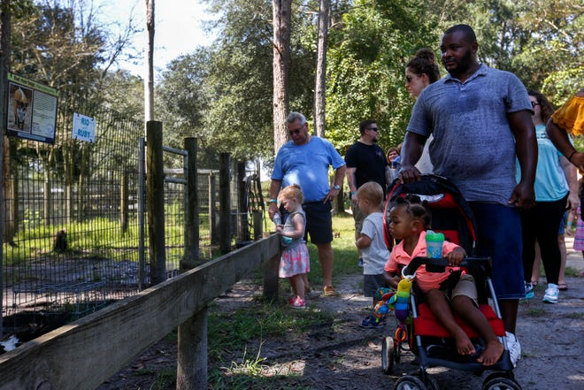 Visitors at the Carson Springs Wildlife Conservation Foundation in Gainesville look at red river hogs during a tour on Saturday. The sanctuary initially offered driving tours but switched to walking tours due to rain.