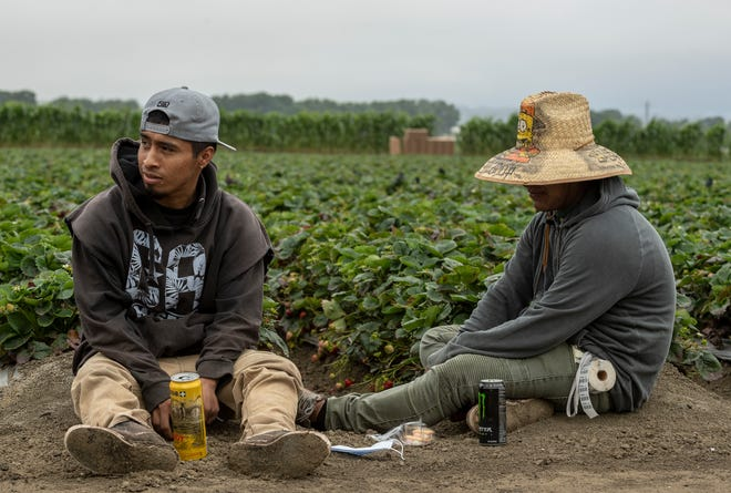 Two farmworkers sit at the end of strawberry field rows for their lunch break in Watsonville, Calif.
