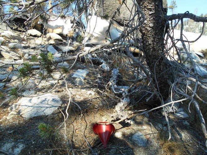 Debris scattered in Sequoia National Park after a deadly plane crash.