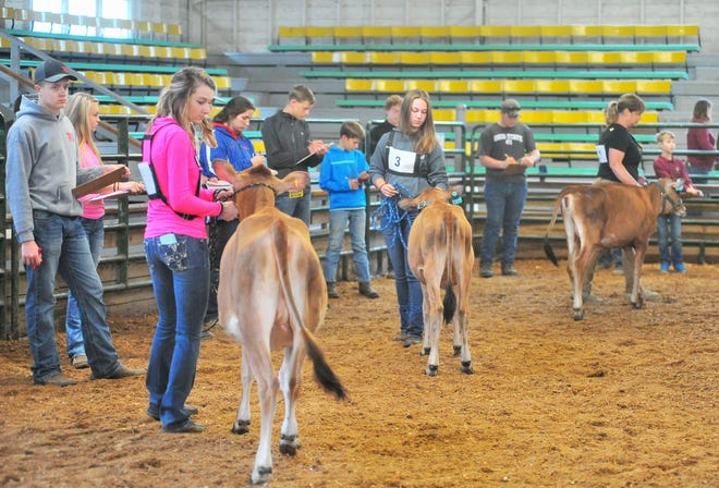 Dairy judging will be one of the livestock contests that will be at the Junior Fair only Wayne County Fair, which runs Sept. 11-16. The winner of each livestock category will go on to the new contest known as the Show of Showmen.