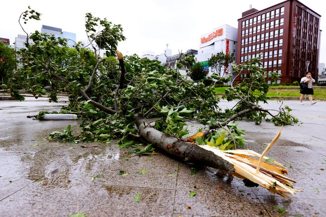 A broken tree lies in a lot after typhoon hit Fukuoka, southwestern Japan, on Monday. The second powerful typhoon to slam Japan in a week left people injured, damaged buildings, caused blackouts at nearly half a million homes and paralyzed traffic in southern Japanese islands before headed to South Korea.